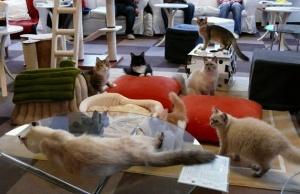 Новая мода на кафе с кошками